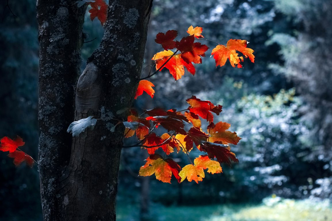 The Season of Changing Shades and Fallen Leaves!