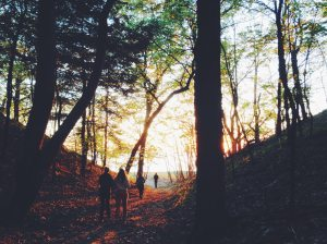 people-walking-in-forrest-during-fall-season