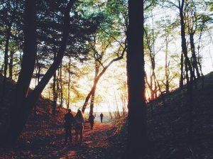 people-walking-in-forrest-during-fall-season